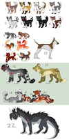 22 adopts by Chargay