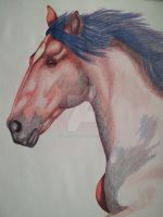 Red Horse by NewfieArtGirl