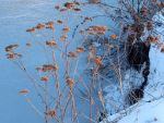 By the frozen pond I by rosaarvensis
