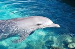 Baby Dolphin at Seaworld by DanielleMiner
