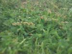 This grass is always green 2 by Alainababy