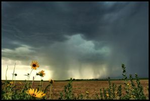 Afternoon in Kansas by FramedByNature
