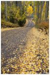Autumn Road by Nate-Zeman