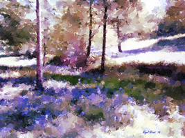 Bluebells At Ashenbank Woods by Nigel-Hirst