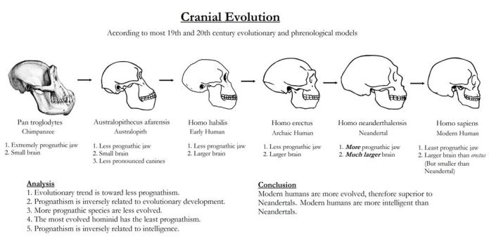 Cranial Evolution for FW 200 dpi by PearsonMoore2