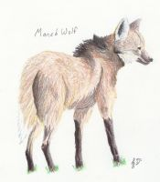 Maned Wolf by NikkiSkye8