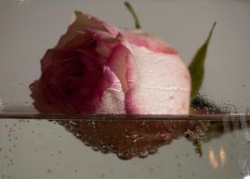 Floating rose by artyphotoworks