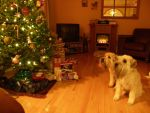 My dogs love Christmas by Lou-in-Canada