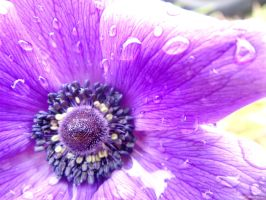 Flower after the rain by shahar12