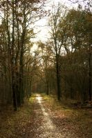 Sunny Path ahead 1 by steppelandstock