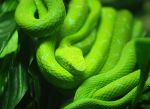 green snake by mohaganbev