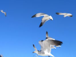 more seagulls by bipolargenius