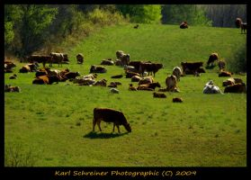 On The Farm 4 by KSPhotographic