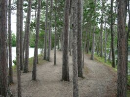 738 - trees by WolfC-Stock
