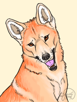 Dingo Animation Test 2 by DiamondEden