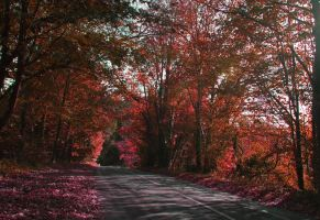 The Autumn Road by Kaz-D