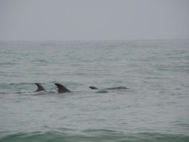 Dolphins at the beach by stephuhnoids