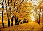 Polish autumn... by Pharaun333