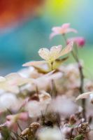 Small world by OK-Photography