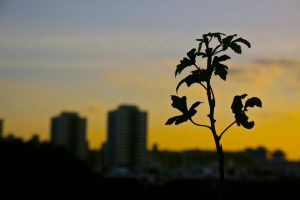 Silhouette by baby-drummer23