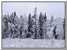 Winter in the forest... by Yancis