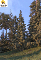 Firs And Pines© by Massi-San