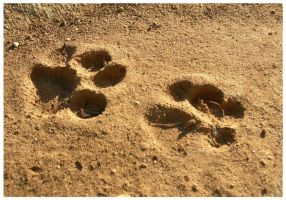cat tracks by tomegatherion