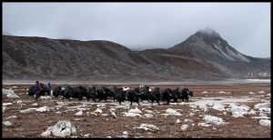 Lunana: The Yak Herders by Dominion-Photography