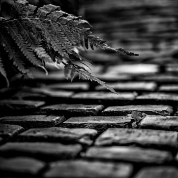 Brick Path to by Bartonbo