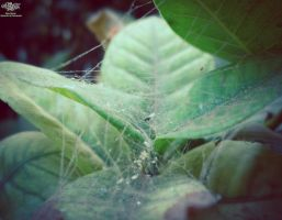 Caught in the spider's web by zooz898
