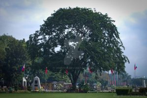 Luneta Tree by dhouy27