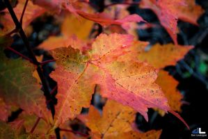 Autumn Colours IV by imonline