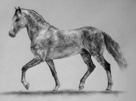 Andalusian Stallion by rainyrose23