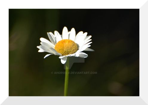 Pushing Up Daisies by Ahorselv