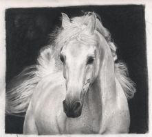 Sepia Horse by lopli