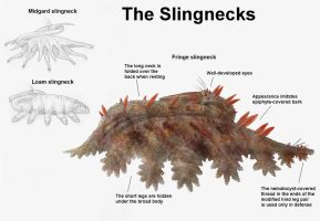 REP: The Slingnecks by Ramul