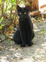 Black Cat015 by effing-stock