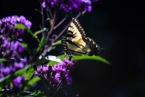 Butterfly by mozella78