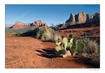 Cactus at Bell Rock by welder