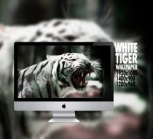 White tiger by xhoOp