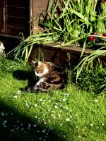 Cat on green grass by BergOpZoom