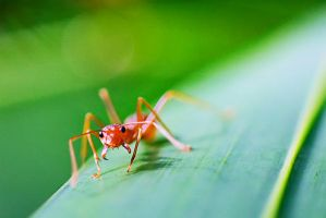 Red Ants 03 by josgoh