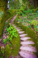 Sintra Forest Stairs Stock by little-spacey