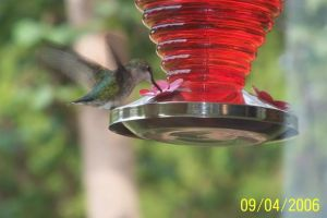 Hummingbird at Feeder by Archanubis
