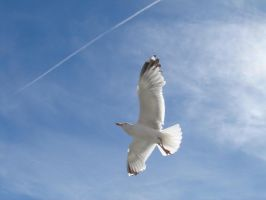 Flight of the Seagull by samarinda