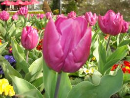 Tulips for Tulipangel by Tielle