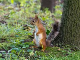 Squirrel jedy by gray-and-striped