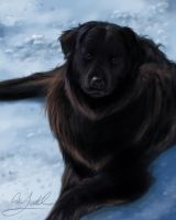 Brown Black Dog in the snow by Yoell