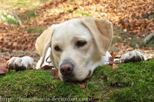 golden labrador Nelly 2 by LeoNemaeus