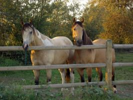 Horses at Sunset by misstiffany